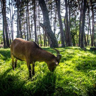 Sázavský ostrov - Rekreační areál