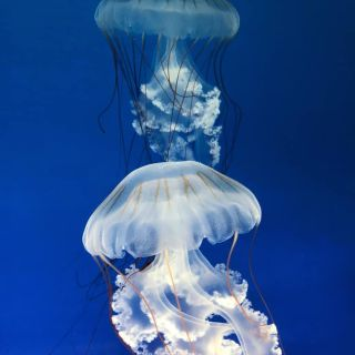 Svět Medúz