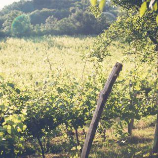WeWine – o kapku lepší zážitky - V kůži vinaře