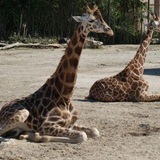 Safari Park Resort Dvůr Králové