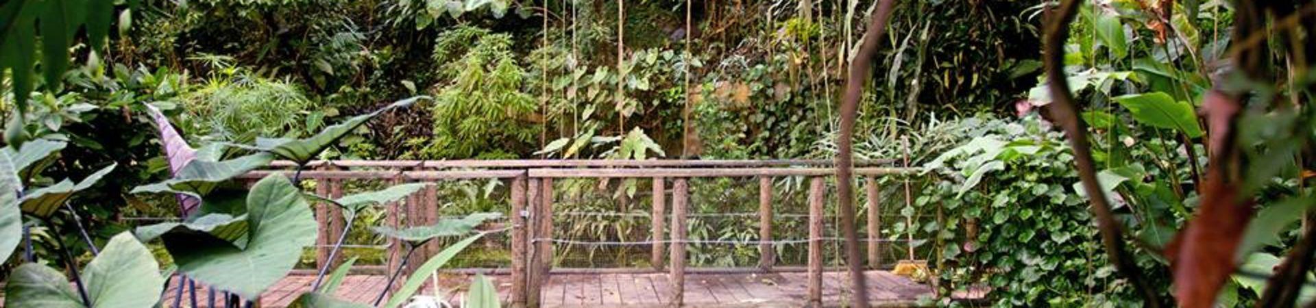 Botanická zahrada hl.m. Prahy - Tropický skleník Fata Morgana